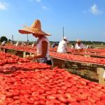 hotel città bella gallipoli i contadini - pomodori rossi